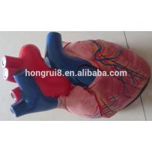 Médico Plástico Corazón Humano Modelo Anatómico