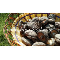 Champignons shiitake frais et sains