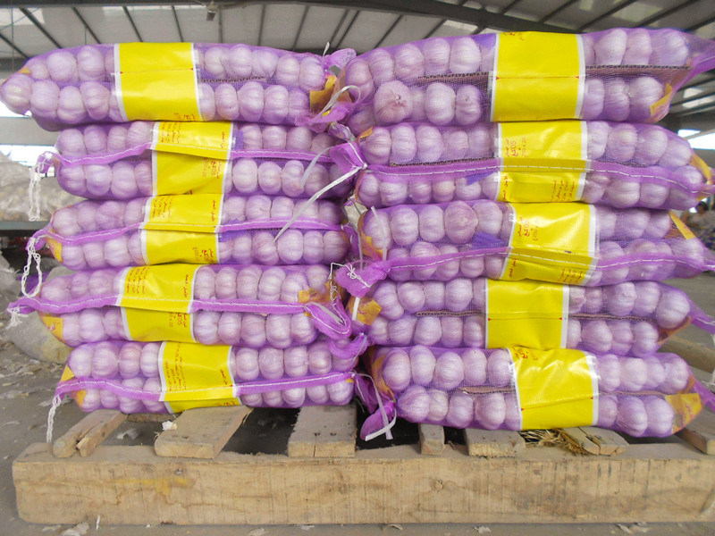 purple mesh bag garlic