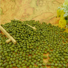 Hochwertige grüne Mungbohne, Herkunft aus der Mongolei, gut verpackt