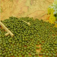 Haricot mungo vert de haute qualité, origine mongolia, paquet de puits