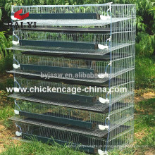 Animal Quail Racing Cages