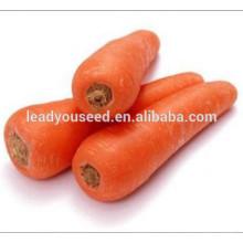 Precio de semillas de zanahoria de alta calidad resistente al calor MCA02 Fushi