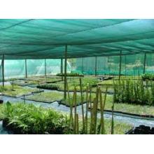 Grünes Schattennetz für Gewächshaus