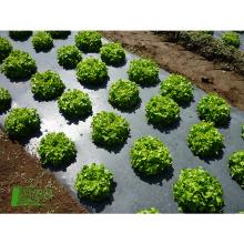 Biodegradação de plásticos de tanque de filme agrícola preto
