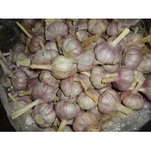 Regular White Garlic New Crop 2019