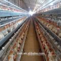 Der Preis von A-Typ Aquakultur Ei Huhn Käfig mit Zubehör