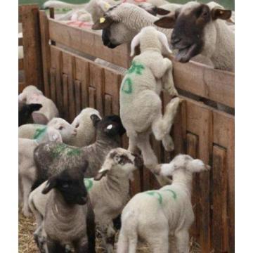 Bunte Tier Marker Spray, Viehbestand Marker