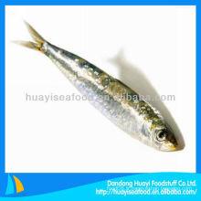 Poisson de mer sardines fraîches sardine congelée