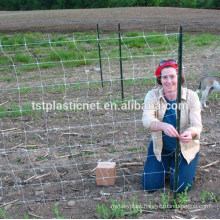 fastening trellis netting for pea bean cucumber climbing