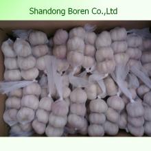 Exportation d'ail blanc pur et normal à l'exportation Shandong