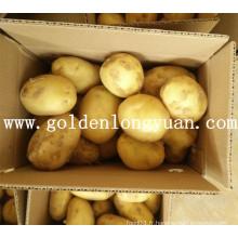 Bonne culture de pommes de terre fraîches en provenance de Chine