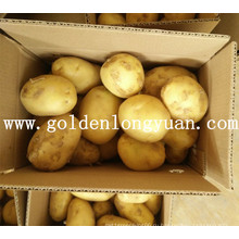 Хороший Свежий Урожай Картофеля Из Китая
