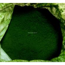 Haute qualité 65% Protein Chlorella