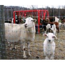 Malla de alambre del campo / cerca del ganado