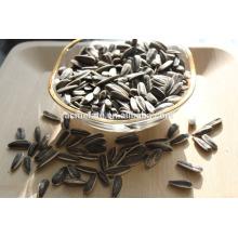 Novo cultivo bom preço sementes de girassol 5009