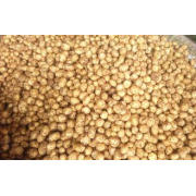 Fresh Vegetable Long Organic Potatoes Contains Vitamins And