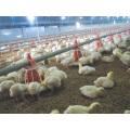 Broiler Chicken Use Plastic Feeding Pans