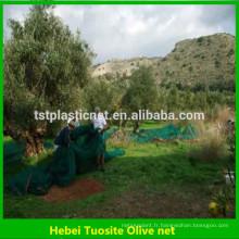 filet de récolte d'olivier