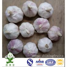 Китайский нормальный белый чеснок Новый урожай 2016 Чеснок