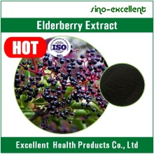 Elderberry Extract Powder