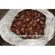 Chestnut Frais à vendre