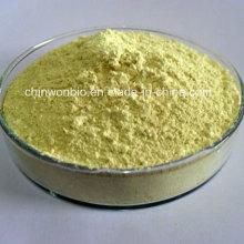 Sophora Japonica Extract Rutin 95%