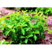 Precio de fábrica Suministro directo Extracto de hoja de Stevia 90% Min. HPLC