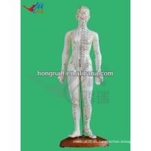Producto de acupuntura humana 48CM, modelo de acupuntura femenina