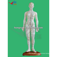 Human acupuncture product 48CM,female acupuncture model