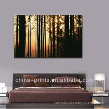 Impressive impressionnante de la forêt du lever du soleil