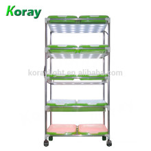 Indoor vertical shelf plant seedlings green sprouts cultivation wheat grass grow system