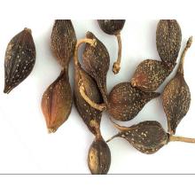 Forsythiae Fructus de qualité supérieure