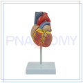 PNT-0400 Melhor preço do modelo anatômico do coração do treinamento com alta qualidade