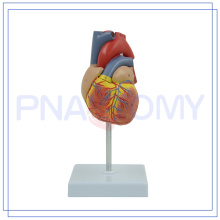 PNT-0400 Medical equipment heart anatomical model made in China