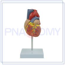 Modelo humano colorido feito sob encomenda de alta qualidade dos vasos sanguíneos do coração PNT-0400 com bom serviço