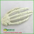 WHOLESALE SIMULATION BONE 12324 Medical Artificial Hand Bone Model , Orthopaedics Practice Simulation Bone