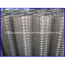 Popular Sale 1 Inch Galvanized /Electro Galvanized Welded Wire Mesh