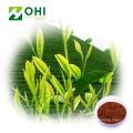 Schwarzer Tee Extrakt Polyphenole Pulver
