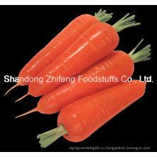 Китай Свежий Морковный Шаньдун
