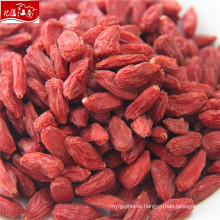 Factory supply new distributor anti-cancer goji berry