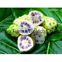 100% natural del polvo de la fruta de Noni / polvo de Noni Jucie / polvo del extracto de Noni