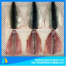 Filete de cavala barato congelado em peixe para fornecedor perfeito
