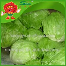 Eisberg Unternehmen Namen Salat künstliche Gemüse zum Verkauf Eisberg Kristall