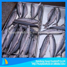 fresh frozen Japanese mackerel fish