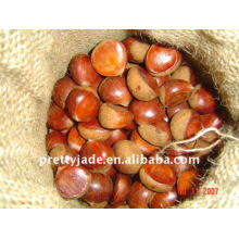 supply Chinese fresh chestnut