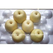 chinesische goldene Birne