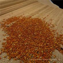 rote Hirse für das menschliche Essen & Vogelfutter aus China