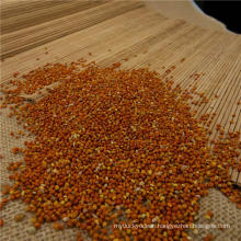 red millet for human food & bird feed from china