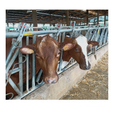 Widely Use Cattle Rubber Mat Hoggery Rubber Mat Horse